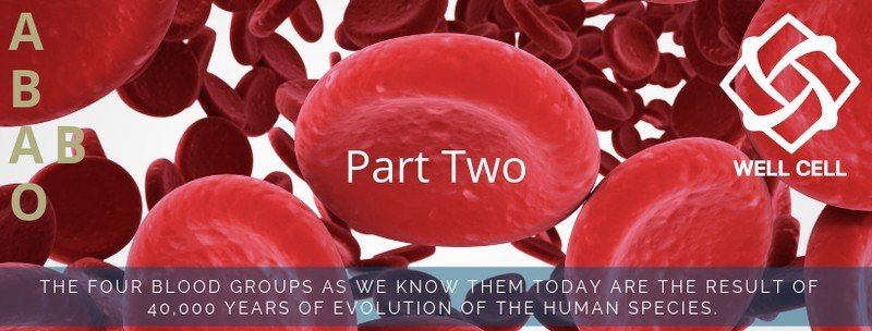 Blood groups and nutrition Part 2