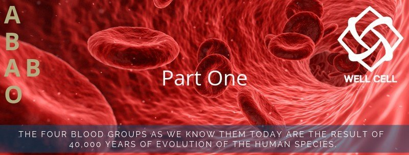 The four blood groups as we know them today are the result of 40,000 years of evolution of the human species.